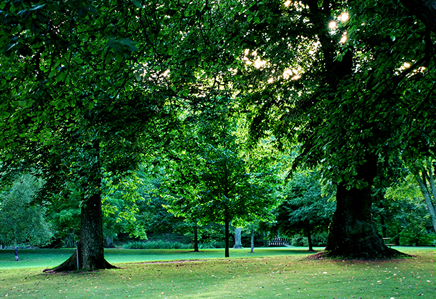 A park with trees. Photo.